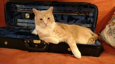 Cat in violin case