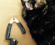 string changing tool with cat